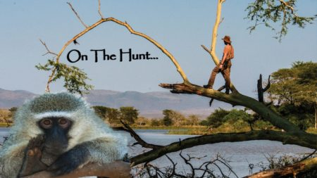 Episode 18: Mkuze Monkeys